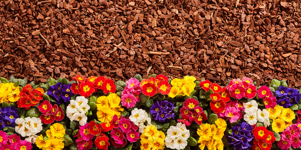 Mulch and Vibrant Flowers